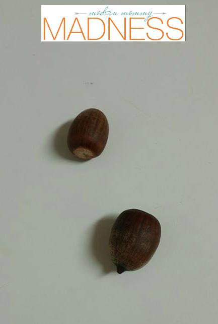 Hoarding acorns just in case.
